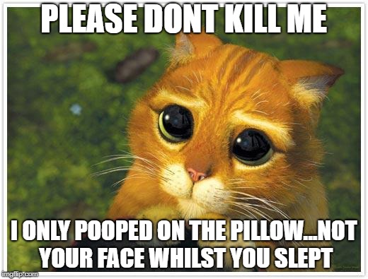 Shrek Cat Meme | PLEASE DONT KILL ME I ONLY POOPED ON THE PILLOW...NOT YOUR FACE WHILST YOU SLEPT | image tagged in memes,shrek cat | made w/ Imgflip meme maker