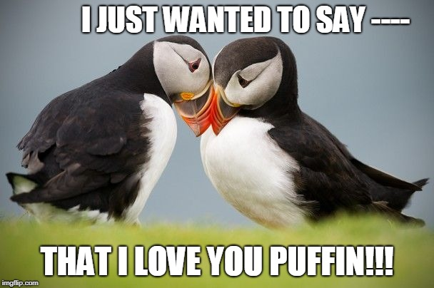 I Love You Puffin | I JUST WANTED TO SAY ---- THAT I LOVE YOU PUFFIN!!! | image tagged in memes,puffin | made w/ Imgflip meme maker