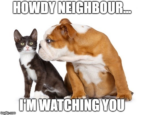 HOWDY NEIGHBOUR... I'M WATCHING YOU | image tagged in bulldog kitten | made w/ Imgflip meme maker