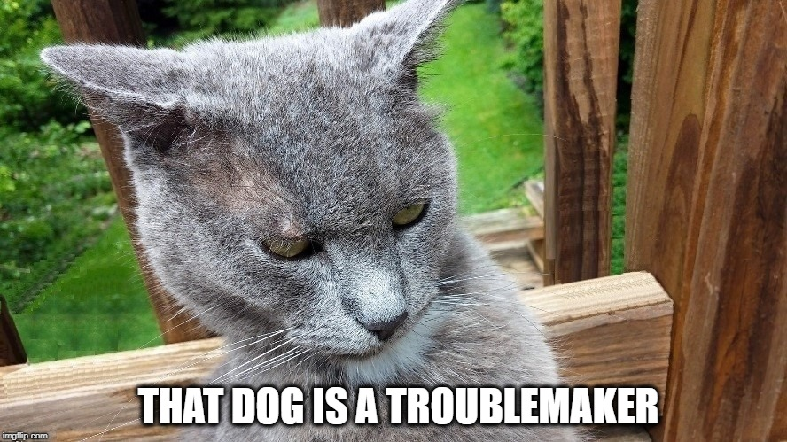 THAT DOG IS A TROUBLEMAKER | made w/ Imgflip meme maker