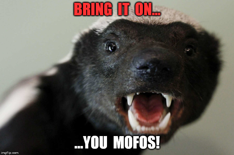 BRING  IT  ON... ...YOU  MOFOS! | image tagged in honey badger | made w/ Imgflip meme maker