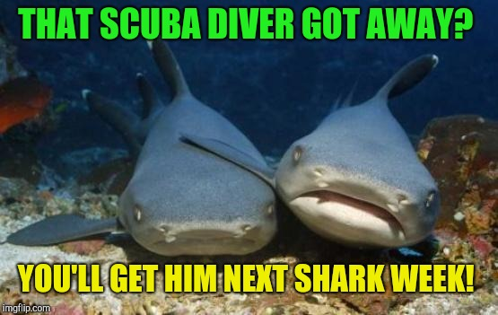 Shark week!  | THAT SCUBA DIVER GOT AWAY? YOU'LL GET HIM NEXT SHARK WEEK! | image tagged in empathetic shark,shark week | made w/ Imgflip meme maker