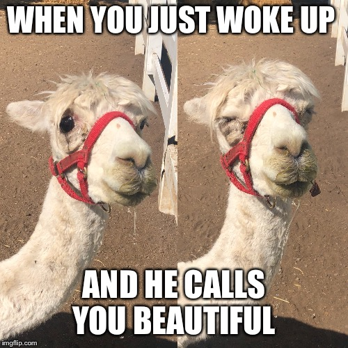 When you just wake up and he calls you beautiful  | WHEN YOU JUST WOKE UP AND HE CALLS YOU BEAUTIFUL | image tagged in funny,cute,when you know,beautiful,animals,cute animals | made w/ Imgflip meme maker