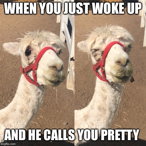 When you just woke up and he calls you pretty | WHEN YOU JUST WOKE UP AND HE CALLS YOU PRETTY | image tagged in pretty,cute,cute animals,woke,funny,funny animals | made w/ Imgflip meme maker