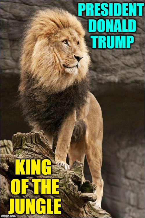 Quite Simply: The Lion | PRESIDENT DONALD TRUMP KING OF THE JUNGLE | image tagged in vince vance,king of the jungle,master of the free world,trump,president of the united states,potus | made w/ Imgflip meme maker