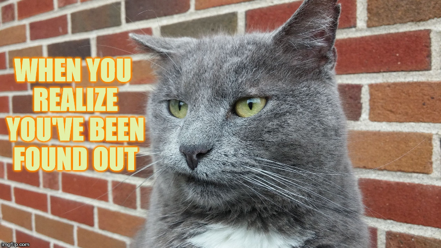 Evil Cat | WHEN YOU REALIZE YOU'VE BEEN FOUND OUT | image tagged in evil cat | made w/ Imgflip meme maker