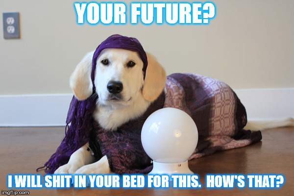 Mystical dog  | YOUR FUTURE? I WILL SHIT IN YOUR BED FOR THIS.  HOW'S THAT? | image tagged in mystical dog | made w/ Imgflip meme maker