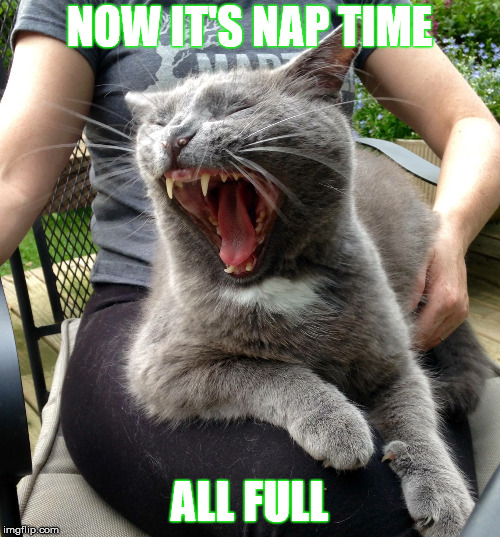 NOW IT'S NAP TIME ALL FULL | made w/ Imgflip meme maker