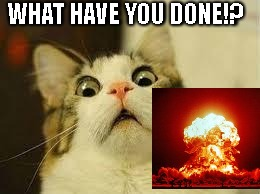 shocked cat | WHAT HAVE YOU DONE!? | image tagged in shocked cat | made w/ Imgflip meme maker
