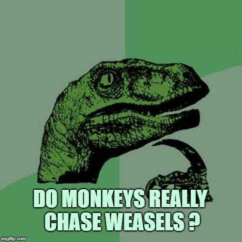 Philosoraptor Meme | DO MONKEYS REALLY CHASE WEASELS ? | image tagged in memes,philosoraptor,monkeys,weasels,weasel,deep thoughts | made w/ Imgflip meme maker