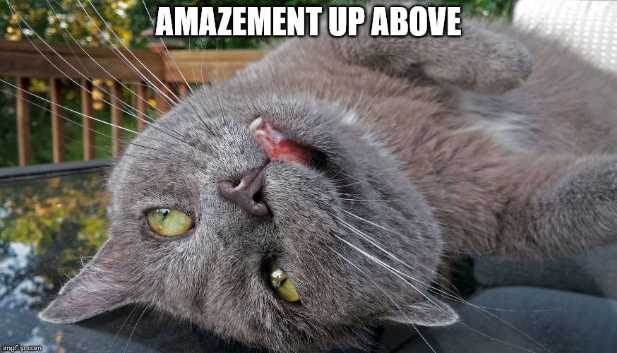 Faded Cat | AMAZEMENT UP ABOVE | image tagged in faded cat | made w/ Imgflip meme maker