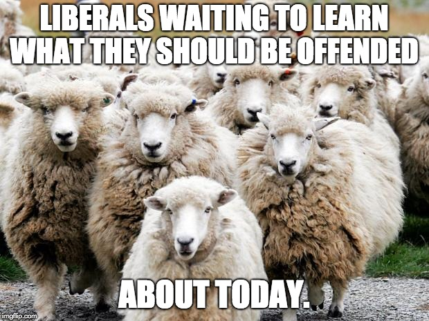 Sheeps | LIBERALS WAITING TO LEARN WHAT THEY SHOULD BE OFFENDED ABOUT TODAY. | image tagged in sheeps | made w/ Imgflip meme maker