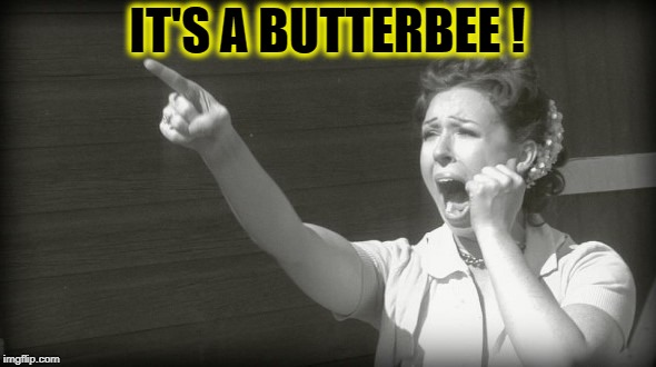 IT'S A BUTTERBEE ! | made w/ Imgflip meme maker