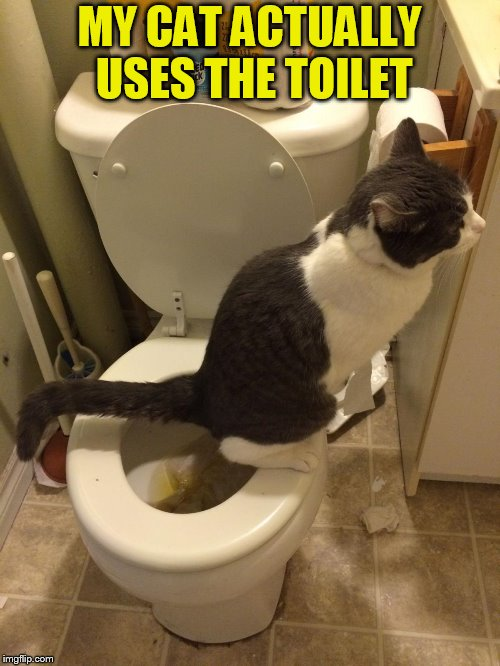 MY CAT ACTUALLY USES THE TOILET | made w/ Imgflip meme maker