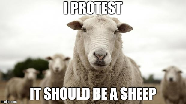 Sheep | I PROTEST IT SHOULD BE A SHEEP | image tagged in sheep | made w/ Imgflip meme maker