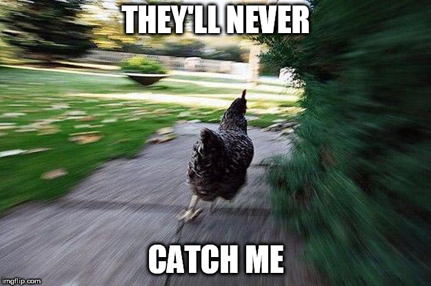 Chicken Running | THEY'LL NEVER CATCH ME | image tagged in chicken running | made w/ Imgflip meme maker