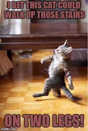Walking Cat | I BET THIS CAT COULD WALK UP THOSE STAIRS ON TWO LEGS! | image tagged in walking cat | made w/ Imgflip meme maker