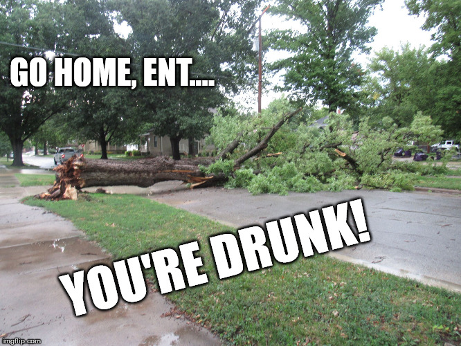 Go home, Ent...you're drunk! | GO HOME, ENT.... YOU'RE DRUNK! | image tagged in fallen tree,ents,drunk | made w/ Imgflip meme maker