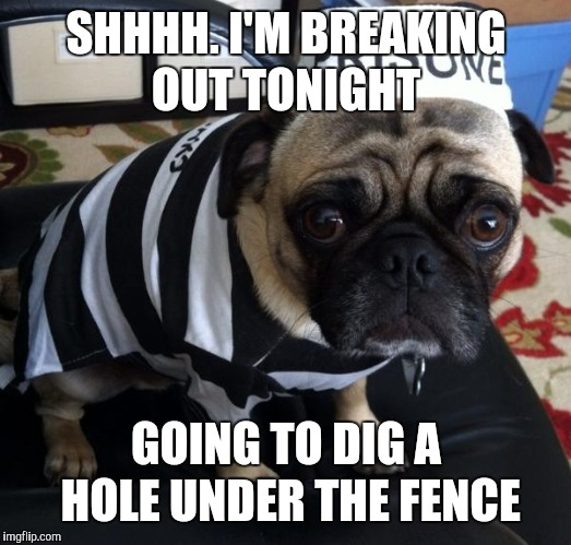SHHHH. I'M BREAKING OUT TONIGHT GOING TO DIG A HOLE UNDER THE FENCE | made w/ Imgflip meme maker