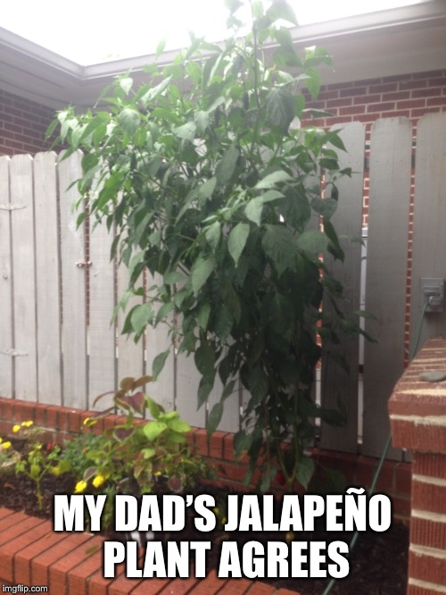MY DAD'S JALAPEÑO PLANT AGREES | made w/ Imgflip meme maker