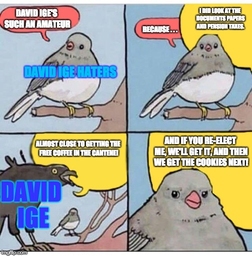 For David Ige Haters | DAVID IGE'S SUCH AN AMATEUR AND IF YOU RE-ELECT ME, WE'LL GET IT, AND THEN WE GET THE COOKIES NEXT! BECAUSE . . . DAVID IGE HATERS I DID LOO | image tagged in annoyed bird,hawaii,governor,election 2018,politics,memes | made w/ Imgflip meme maker