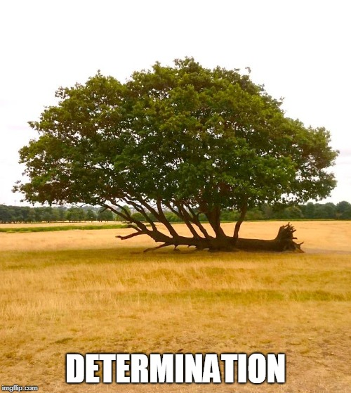 I ain't that tall, but you oughta see my root! | DETERMINATION | image tagged in vince vance,trees,motivational poster,never say never,never give up | made w/ Imgflip meme maker