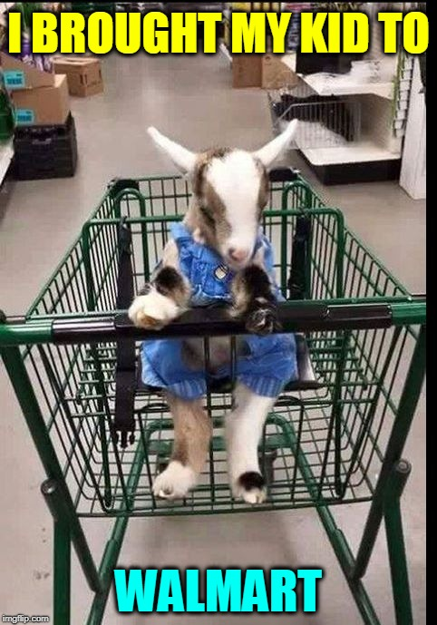 Just Another Day at America's Superstore | I BROUGHT MY KID TO WALMART | image tagged in my kid,vince vance,baby goat,goats,cute animals,walmart | made w/ Imgflip meme maker