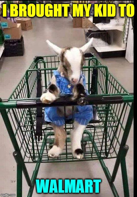 Baby Goat Memes Gifs Imgflip