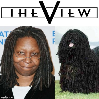 Whoopi the dog | image tagged in whoopi goldberg,dog,poodle,beeotch,triggered bigot | made w/ Imgflip meme maker