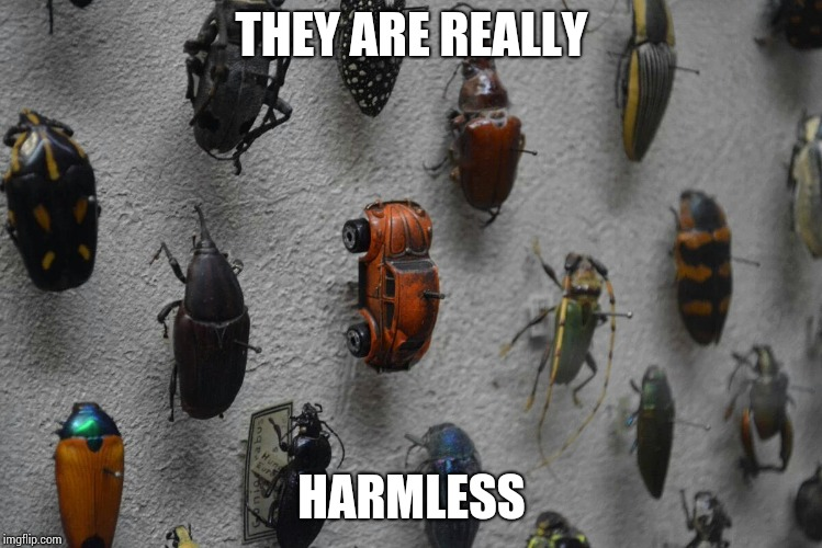 THEY ARE REALLY HARMLESS | made w/ Imgflip meme maker