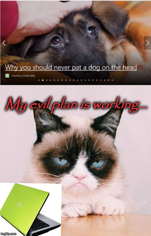 Step 1: Make all humans depressed | My evil plan is working... | image tagged in cats,grumpy cat,dogs an cats,dogs,hack,hacking | made w/ Imgflip meme maker