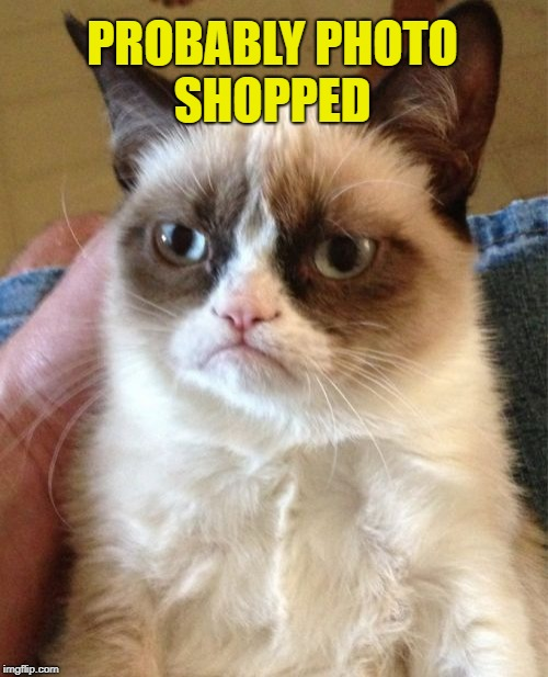 Grumpy Cat Meme | PROBABLY PHOTO SHOPPED | image tagged in memes,grumpy cat | made w/ Imgflip meme maker