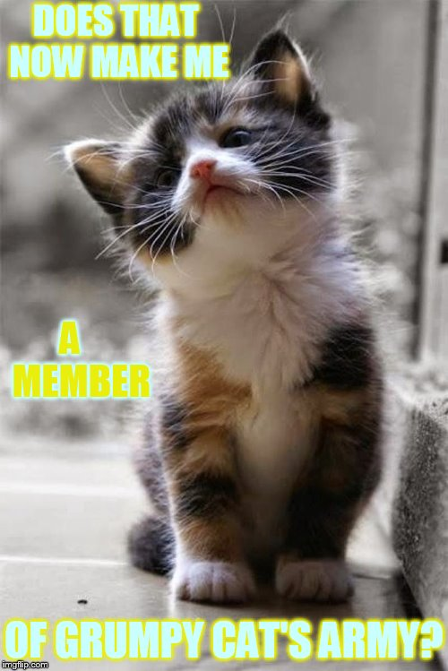 DOES THAT NOW MAKE ME OF GRUMPY CAT'S ARMY? A   MEMBER | made w/ Imgflip meme maker