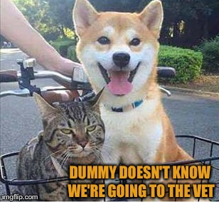Maybe they'll do something about his breath. | DUMMY DOESN'T KNOW WE'RE GOING TO THE VET | image tagged in cat,dog,vets,memes,funny | made w/ Imgflip meme maker