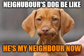 Disappointed Dog | NEIGHUBOUR'S DOG BE LIKE HE'S MY NEIGHBOUR NOW | image tagged in disappointed dog | made w/ Imgflip meme maker