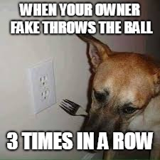 simply sad | WHEN YOUR OWNER FAKE THROWS THE BALL 3 TIMES IN A ROW | image tagged in doggos | made w/ Imgflip meme maker