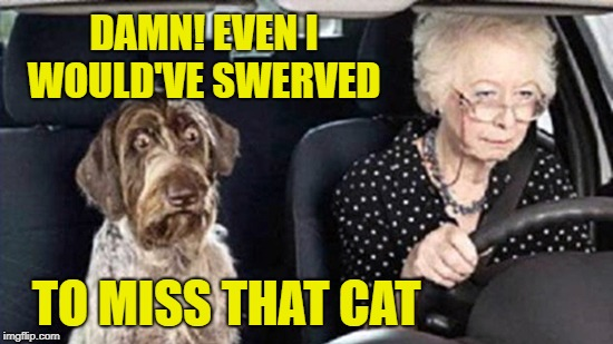 Cold-blooded Granny | DAMN! EVEN I WOULD'VE SWERVED TO MISS THAT CAT | image tagged in funny memes,dog,grandma,bad drivers,cat | made w/ Imgflip meme maker