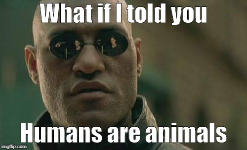 Matrix Morpheus Meme | What if I told you Humans are animals | image tagged in memes,matrix morpheus | made w/ Imgflip meme maker