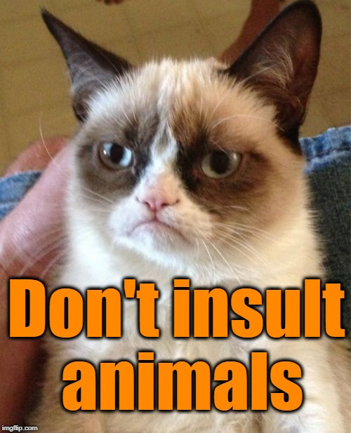 Grumpy Cat Meme | Don't insult animals | image tagged in memes,grumpy cat | made w/ Imgflip meme maker