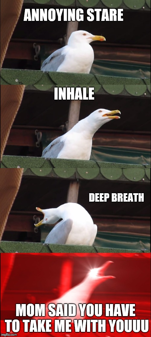 Inhaling Seagull Meme | ANNOYING STARE INHALE DEEP BREATH MOM SAID YOU HAVE TO TAKE ME WITH YOUUU | image tagged in memes,inhaling seagull | made w/ Imgflip meme maker