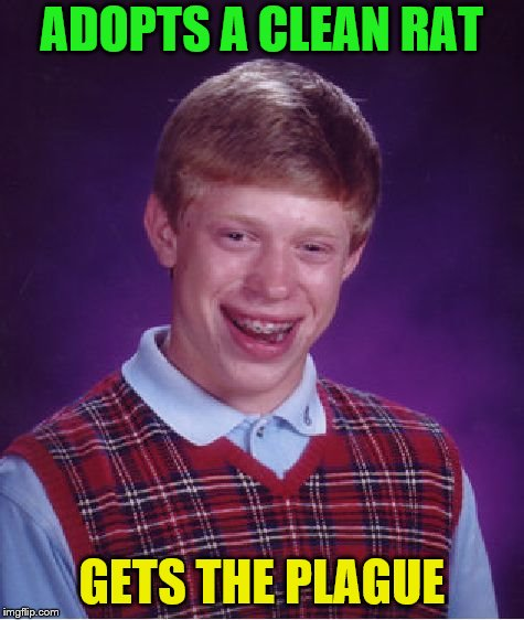Bad Luck Brian Meme | ADOPTS A CLEAN RAT GETS THE PLAGUE | image tagged in memes,bad luck brian | made w/ Imgflip meme maker