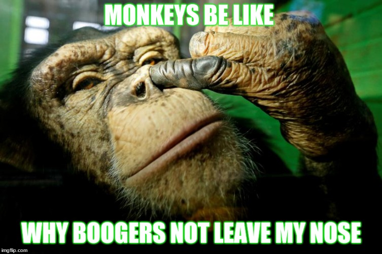 you saw nothing | MONKEYS BE LIKE WHY BOOGERS NOT LEAVE MY NOSE | image tagged in monkey business | made w/ Imgflip meme maker
