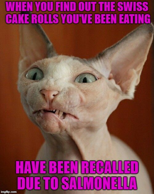Unjust Desserts  |  WHEN YOU FIND OUT THE SWISS CAKE ROLLS YOU'VE BEEN EATING; HAVE BEEN RECALLED DUE TO SALMONELLA | image tagged in funny memes,cat,caturday,chocolate,warning,bad | made w/ Imgflip meme maker