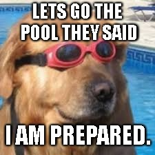 LETS GO THE POOL THEY SAID I AM PREPARED. | image tagged in wet doggo | made w/ Imgflip meme maker