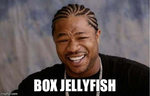 Yo Dawg Heard You Meme | BOX JELLYFISH | image tagged in memes,yo dawg heard you | made w/ Imgflip meme maker