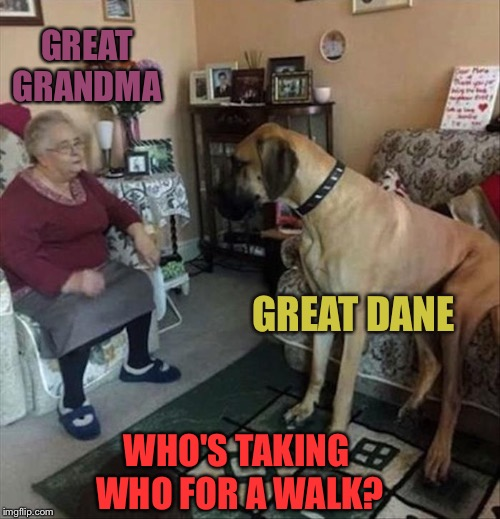 She might need a saddle. | GREAT GRANDMA GREAT DANE WHO'S TAKING WHO FOR A WALK? | image tagged in grandma,great dane,walk,memes,funny | made w/ Imgflip meme maker