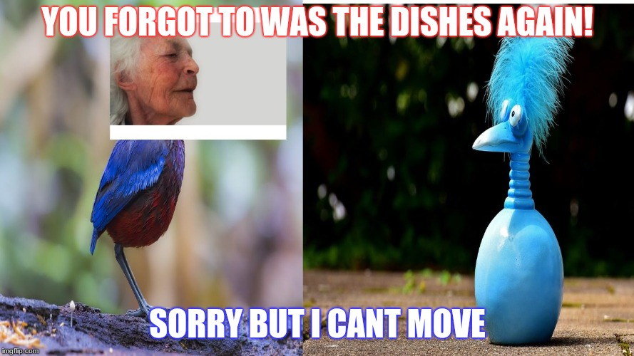YOU FORGOT TO WAS THE DISHES AGAIN! SORRY BUT I CANT MOVE | image tagged in bird | made w/ Imgflip meme maker