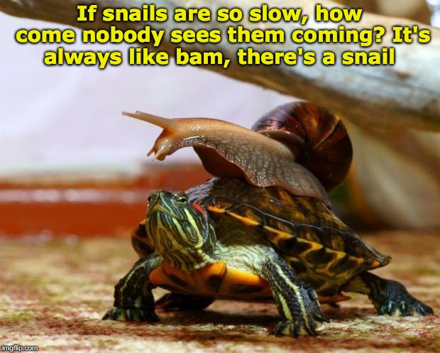 You never see them coming | If snails are so slow, how come nobody sees them coming? It's always like bam, there's a snail | image tagged in snail on a turtle | made w/ Imgflip meme maker