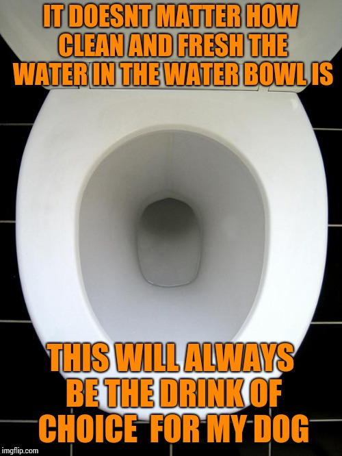 TOILET | IT DOESNT MATTER HOW CLEAN AND FRESH THE WATER IN THE WATER BOWL IS THIS WILL ALWAYS BE THE DRINK OF CHOICE  FOR MY DOG | image tagged in toilet | made w/ Imgflip meme maker