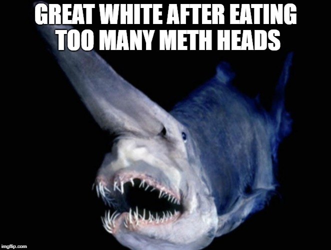 meth shark | GREAT WHITE AFTER EATING TOO MANY METH HEADS | image tagged in meth,funny memes | made w/ Imgflip meme maker